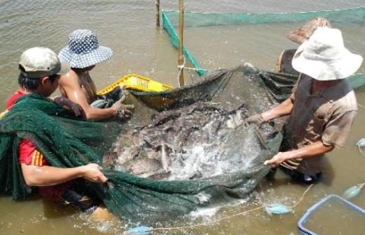 cách làm mồi câu cá lăng